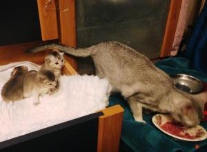 nu al nieuwsgierig naar de grotekattenwereld