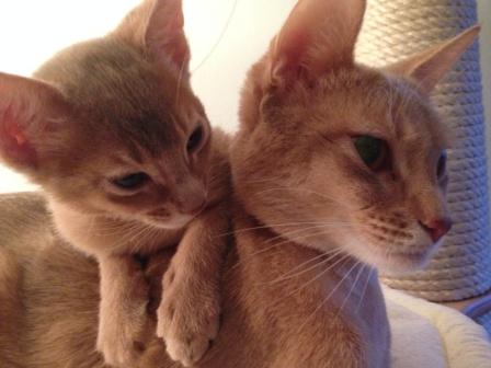 moeder en dochter fawn erendil