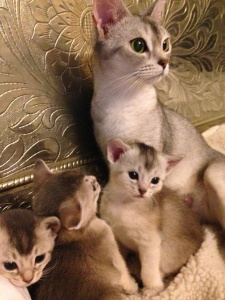 Nut with her third litter, aby of erendil 2015