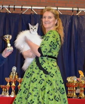 Abessijn Cattery Erendil - Abessijn Thor op show in Heinenoord
